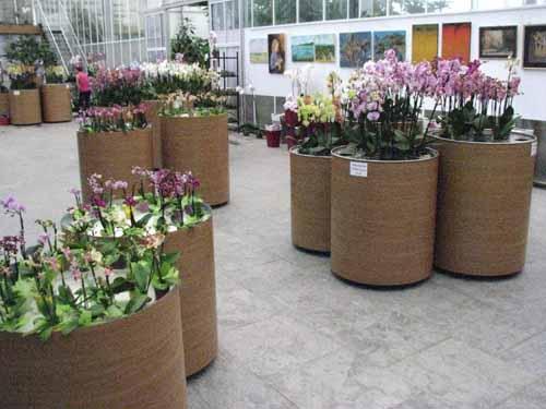 Različne vrste orhidej v botaničnem vrtu v Prekmurju