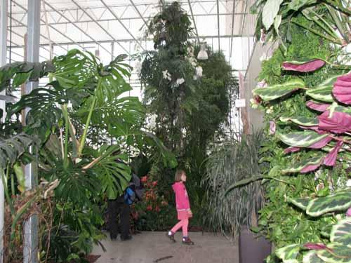 Mimo orhidej v botanični vrt
