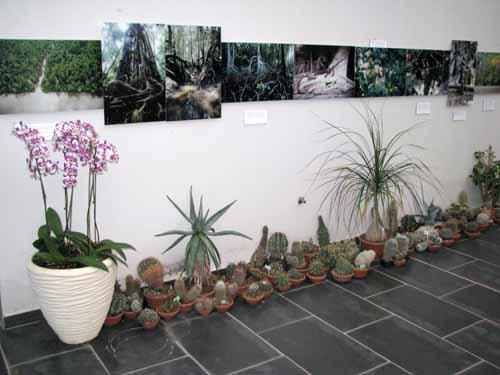 Slikovno gradivo v botaničnem vrtu orhidej v Prekmurju
